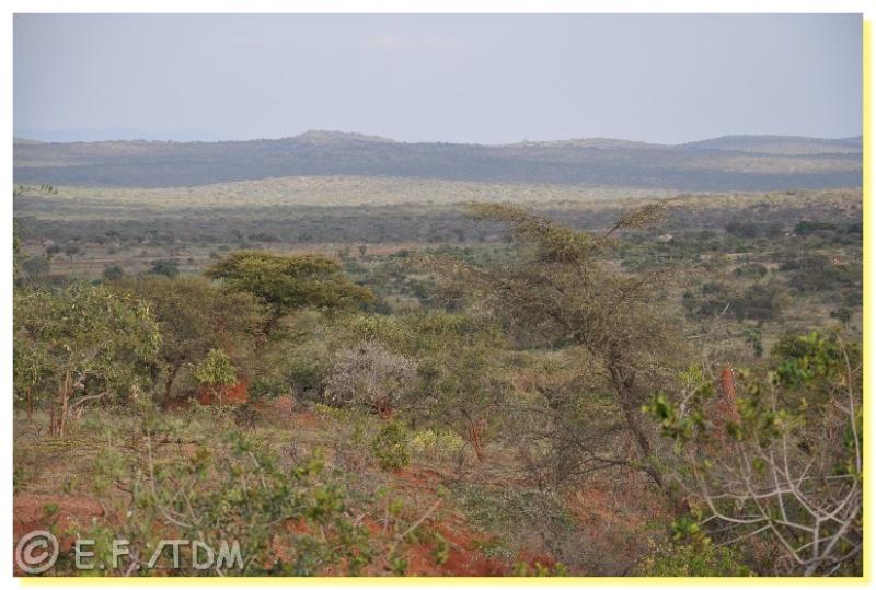 Éthiopie, quelques photos Ethio015