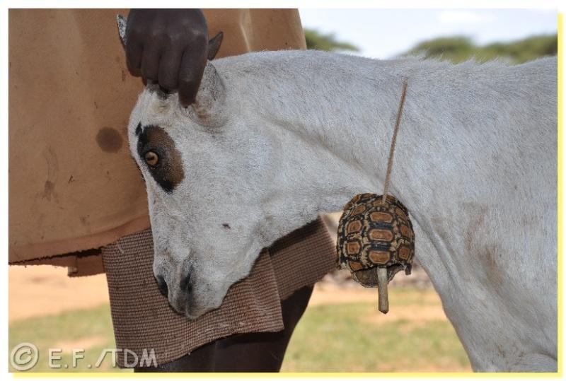 Éthiopie, quelques photos Ethio017