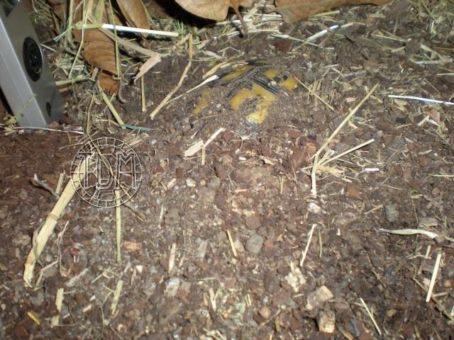 SUD de la France : exemple de cabane, abris divers et fosse d'hibernation Nat310