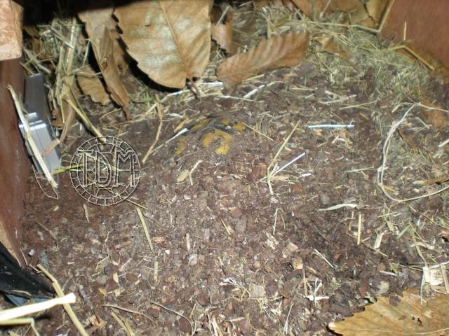 SUD de la France : exemple de cabane, abris divers et fosse d'hibernation Nat410