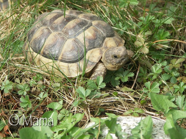 Quelques photos de la sortie d'hibernation de mes carapaces chéries Pict0015