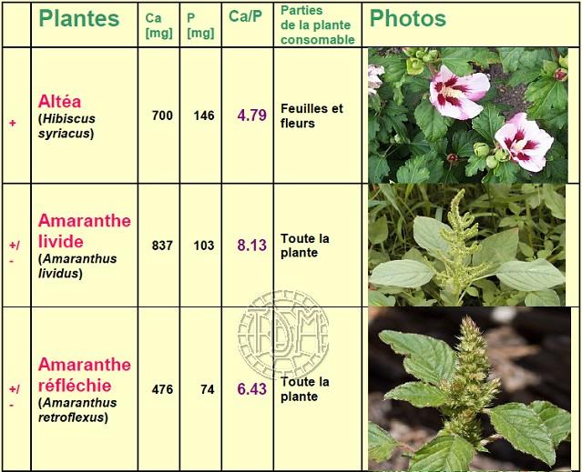 Alimentation des tortues terrestres méditerranéennes Plante10