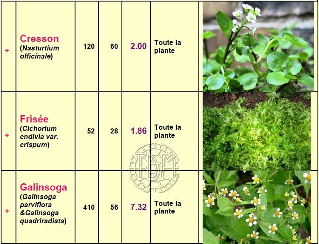 Alimentation des tortues terrestres méditerranéennes Plante12