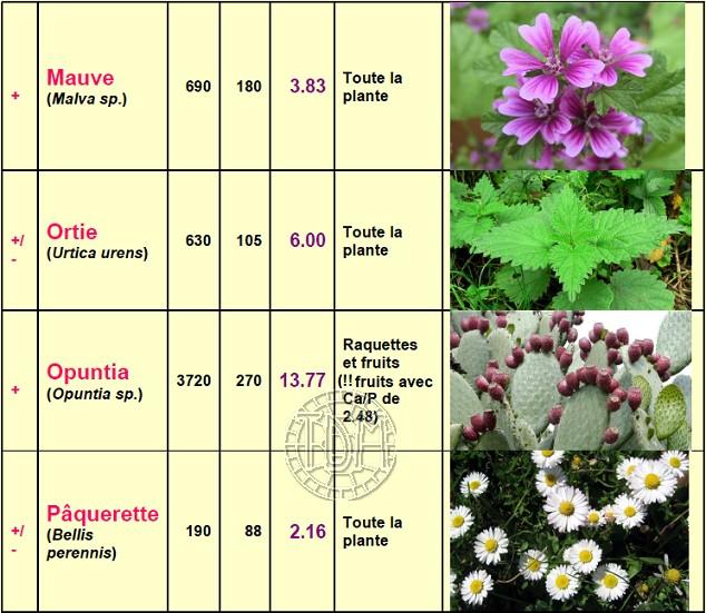 Alimentation des tortues terrestres méditerranéennes Plante14