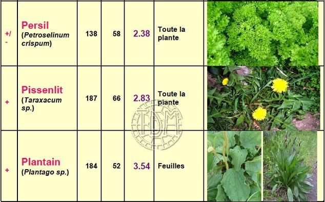 Alimentation des tortues terrestres méditerranéennes Plante15