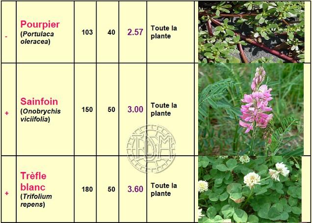 Alimentation des tortues terrestres méditerranéennes Plante16