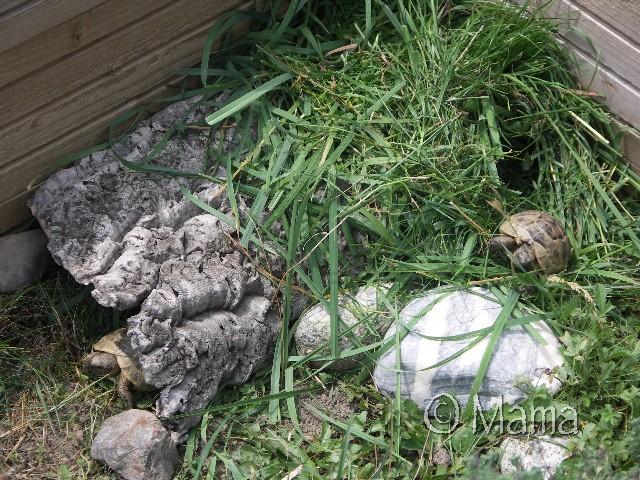 Tas d'herbe, photos retrouvées... Tasher10