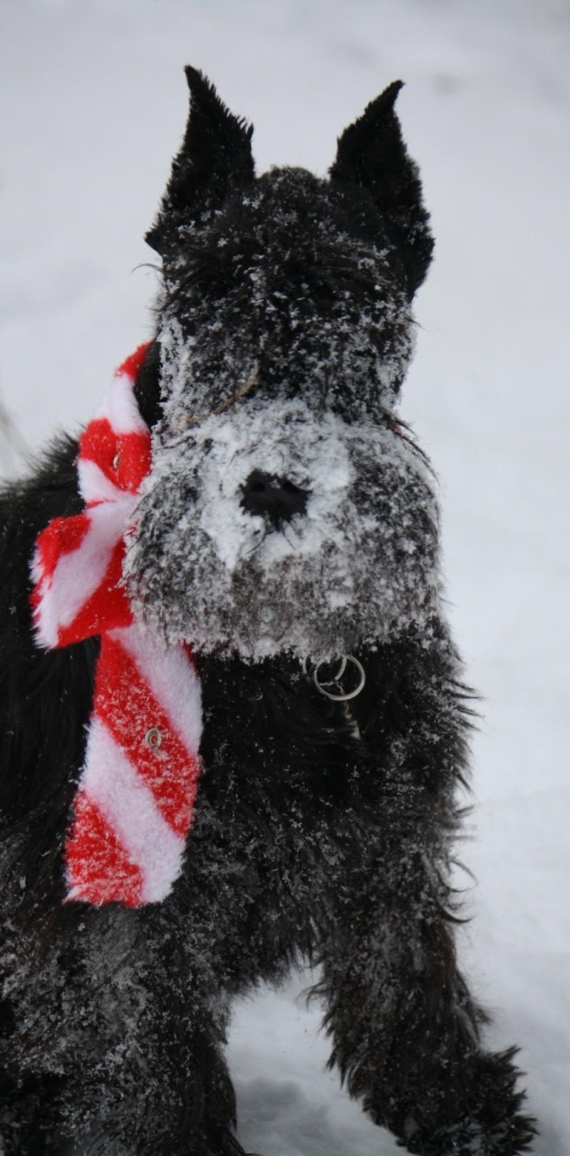 Peppi love snow   Peppi110
