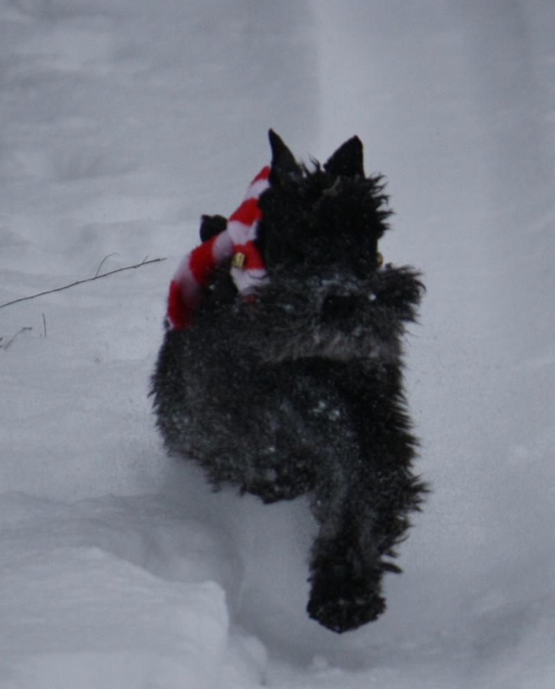 Peppi love snow   Peppi310