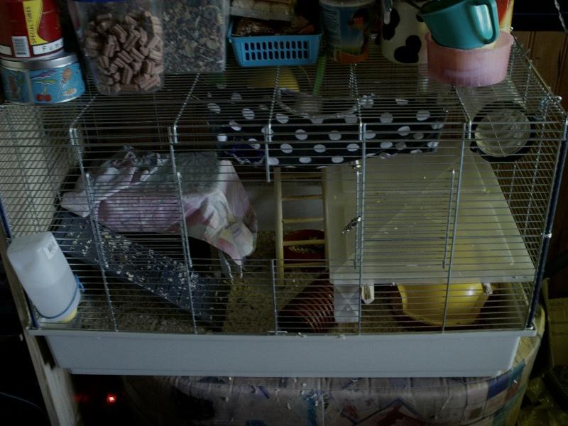 Cherche cage deux rats (88,54) Imag0014