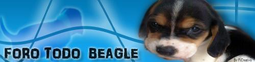 Todo Beagle