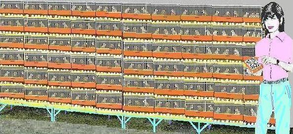 COSTO,  RINDE E IMAGEN DEL PLANTEL INICIAL PREFERIDO (E) con 1.200 aves PONEDORAS  Codorn11