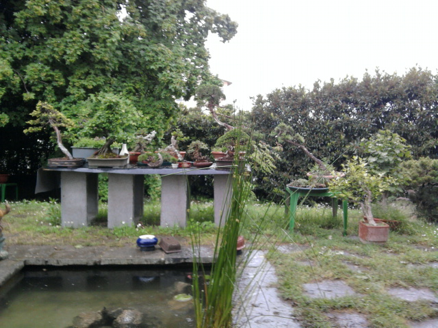Dove coltiviamo i nostri bonsai Foto0114