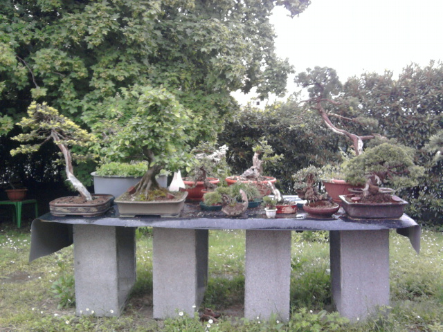 Dove coltiviamo i nostri bonsai Foto0115