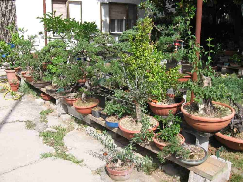 Dove coltiviamo i nostri bonsai Garden10