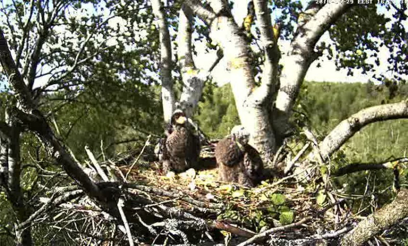 White-tailed Eagle Camera Lovers - Page 10 Vlcsna16