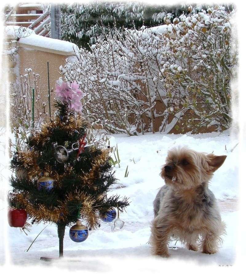 Concours photo du mois de décembre 2010. Thème : Féerie de Noël Titi10
