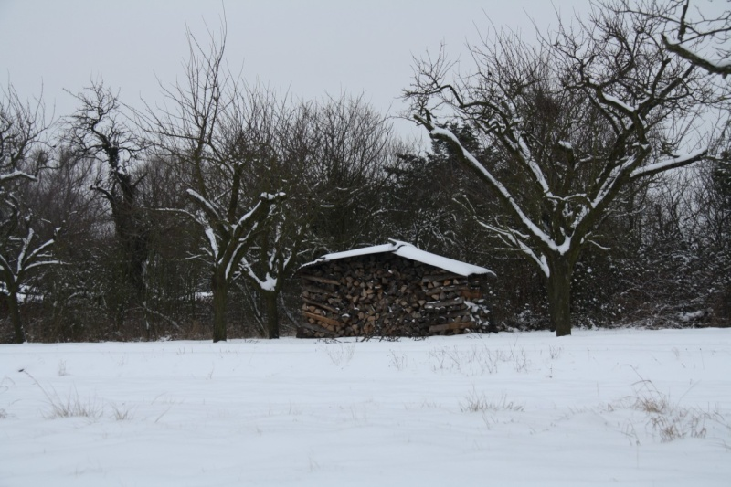 Vive la neige à Wangen ! - Page 2 Img_8428