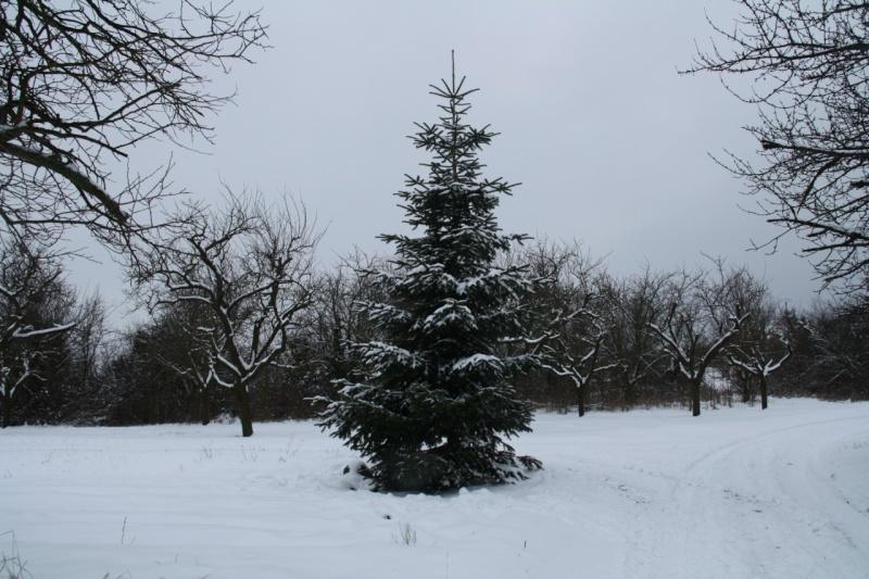 Vive la neige à Wangen ! - Page 2 Img_8429
