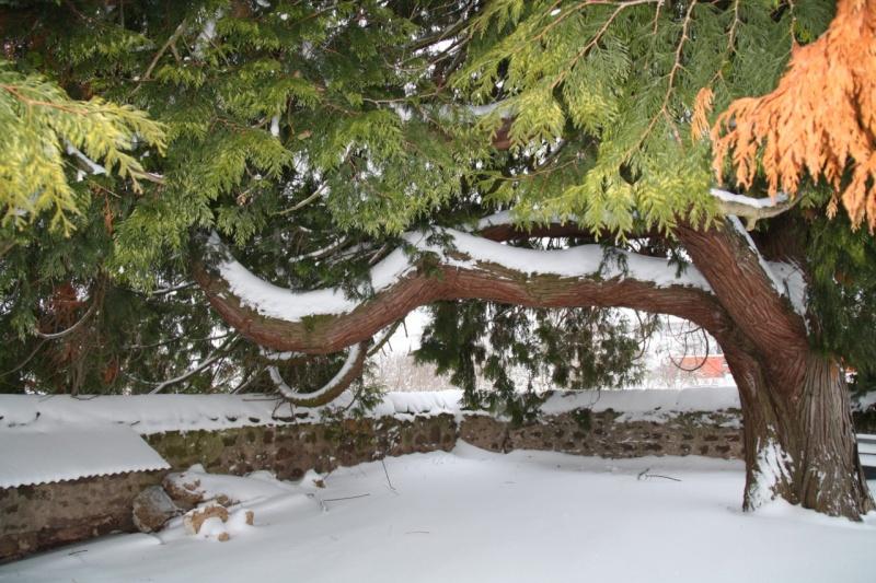 Vive la neige à Wangen ! - Page 2 Img_8510