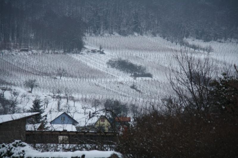 Vive la neige à Wangen ! - Page 2 Img_8511