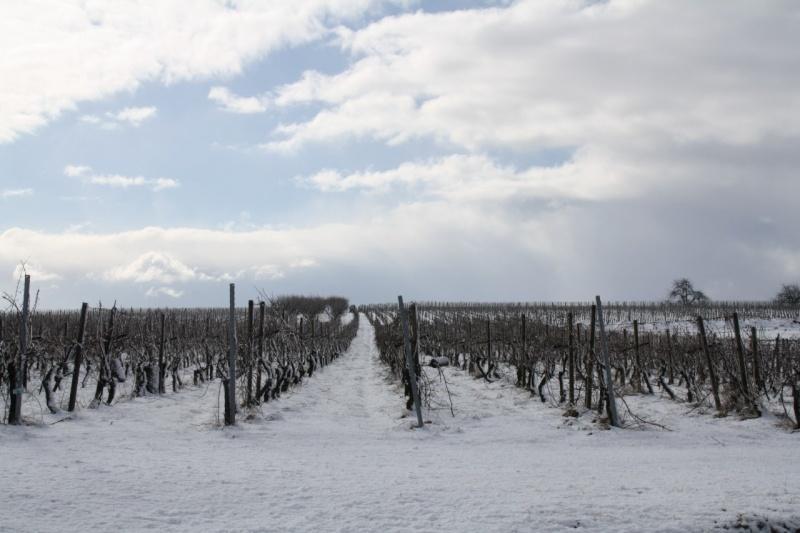 Vive la neige à Wangen ! - Page 2 Img_8612