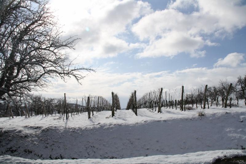 Vive la neige à Wangen ! - Page 2 Img_8616