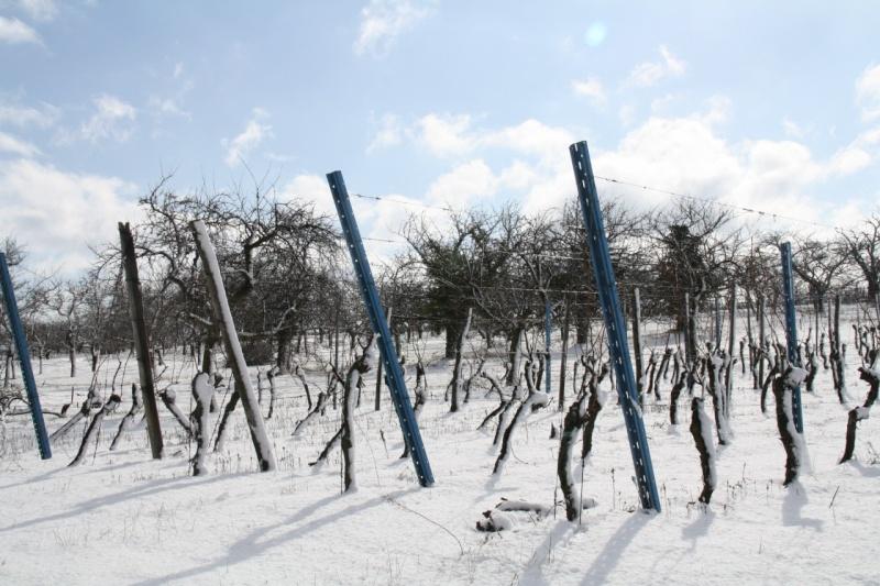 Vive la neige à Wangen ! - Page 2 Img_8619
