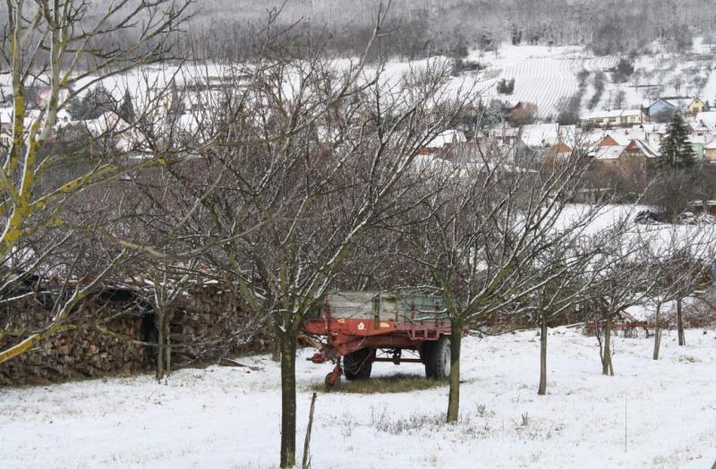Vive la neige à Wangen ! - Page 2 Img_8623