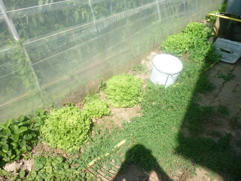 Mauvaise herbe  P1180924