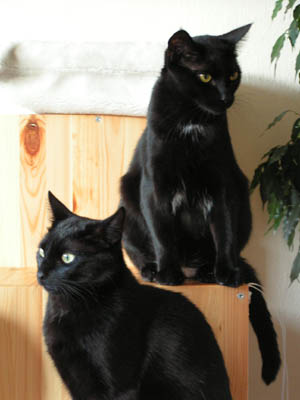 La cohabitation entre les chats Deux_c10