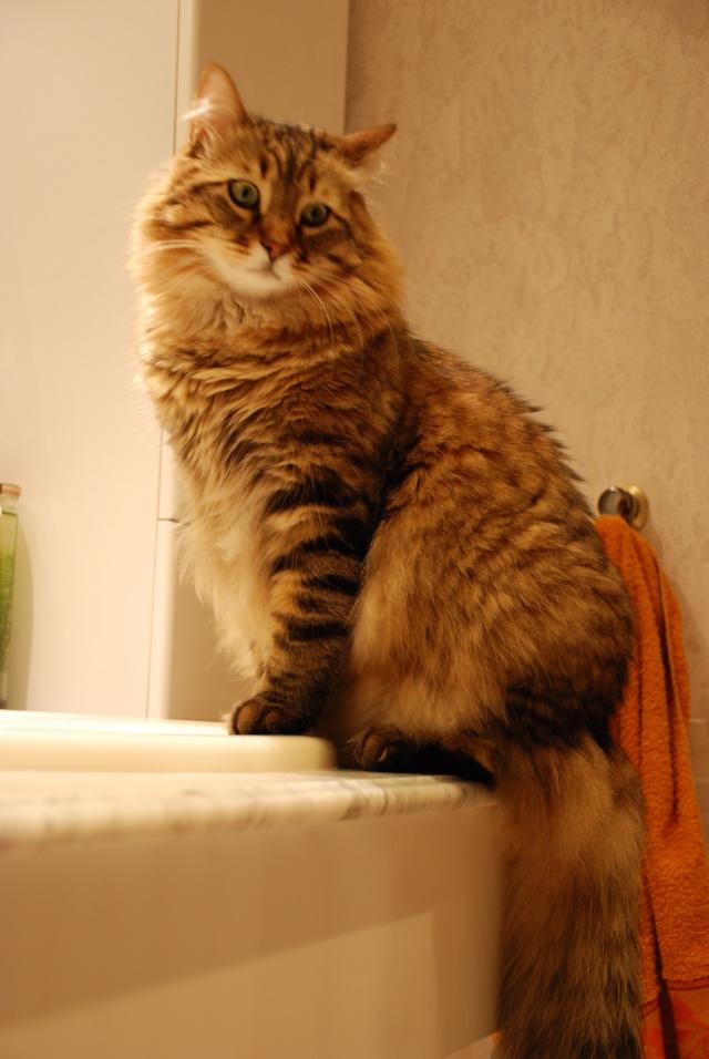 Spécials Photos : Avant/Après de nos chats Dsc_0610