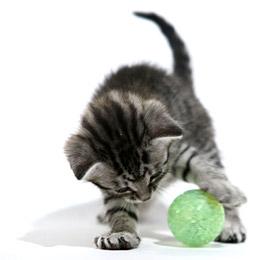 Vaincre l'ennui de votre chat Jeux11