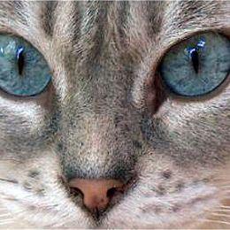 Que traduit le regard de votre chat ? Regard10