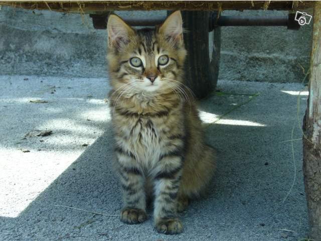 Spécials Photos : Avant/Après de nos chats Sans_t10