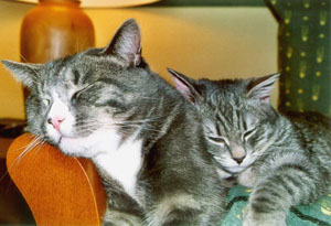 La cohabitation entre les chats Sociab10