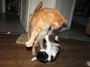 La cohabitation entre les chats T-n20e10