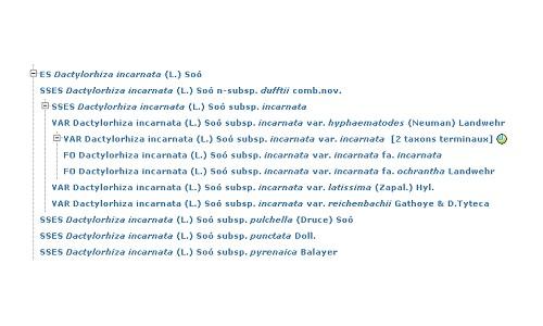 Arbre taxonomique Taxon_10