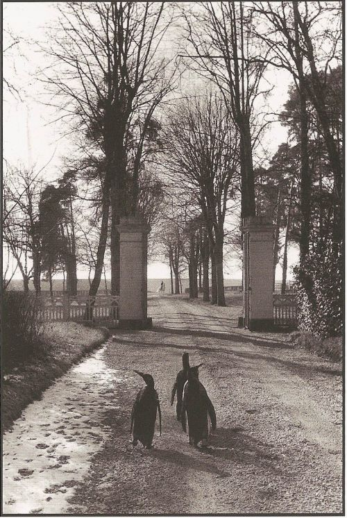 Willy Ronis [Photographe] - Page 3 Guimin10