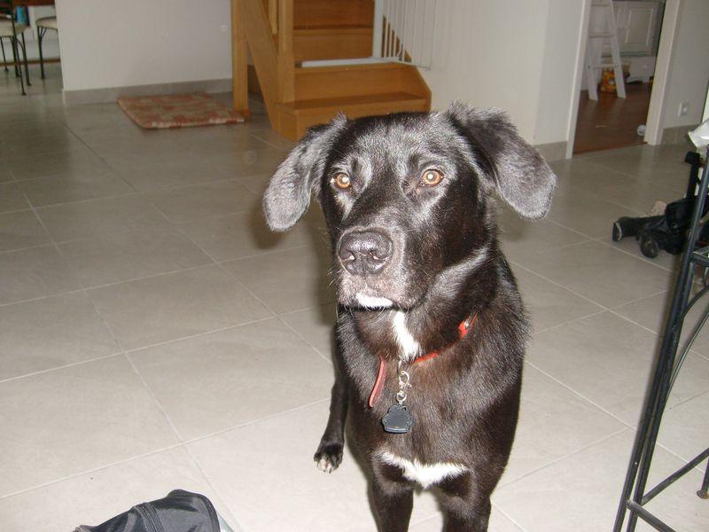 Ugoz, jeune chien Ugoz_011