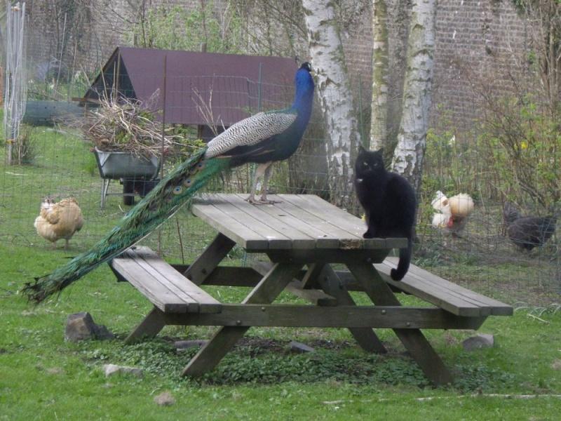 Scènes du jardin Poan_e10