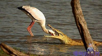 Gambar - Gambar Binatang Tergokil di Dunia Internet! 11_dok10