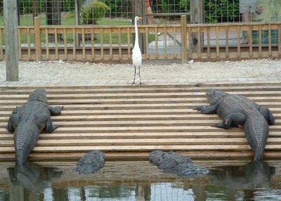Gambar - Gambar Binatang Tergokil di Dunia Internet! 14_was10