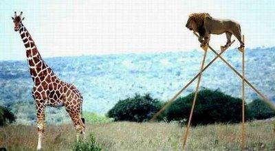 Gambar - Gambar Binatang Tergokil di Dunia Internet! 27_pem10