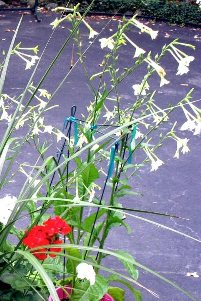Heirloom seeds Img_1814