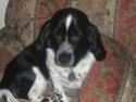 Pets {We all love 'em!} Baxter10