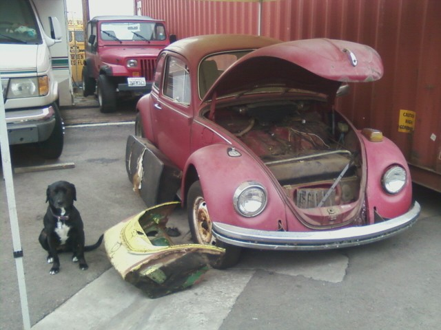 1968 Build. Cali bug project.. Sadiek10