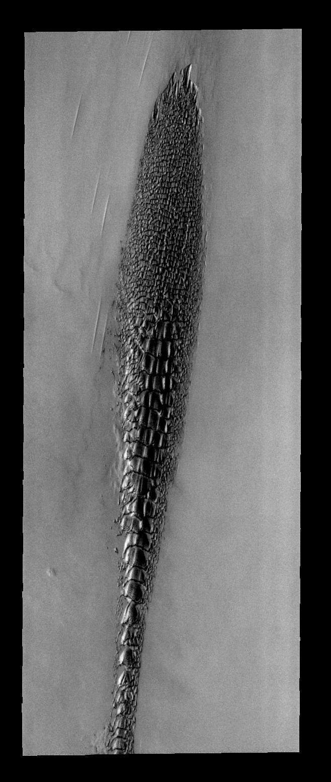 """Nasa presenta un """" Animal Alienígena en Marte """" Pia08510"""