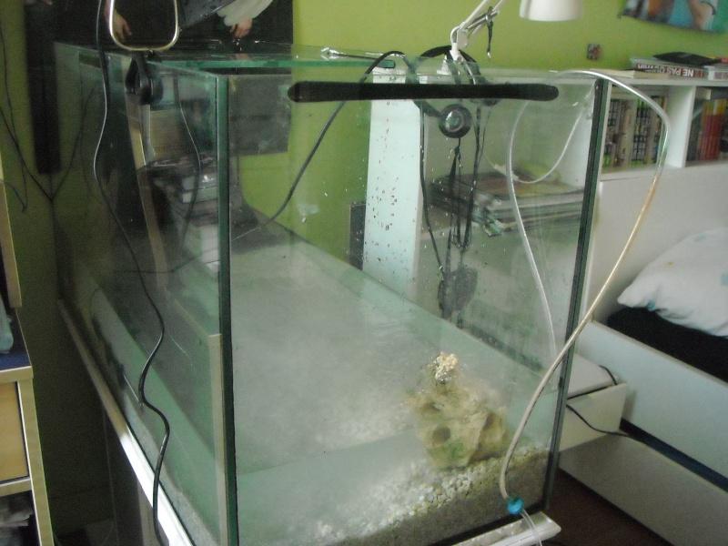 Mon aqua et ma Graptemys Dscn0115