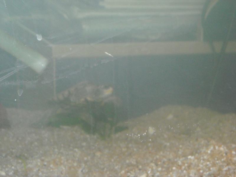 Mon aqua et ma Graptemys Dscn0118